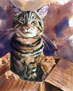 tabby in a box. watercolor.