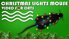 CAT GAMES - Christmas Lights Mouse! Video for Cats to Watch. More Videos for Cats: http://www.tvbini.com #catTV #TVforcats #tvbini #movieforcats #entertainmentforcats #catgames #videoforcats #cats #pets #videosforcats #catentertainment #crazycatlady #meowrrychristmas #christmasmice #catmas