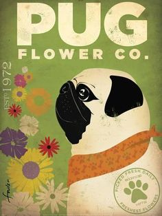 Art Print: Pug Flower Co. Art Print by Stephen Fowler by Stephen Fowler : 16x12in