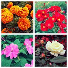 The Arboretum, Garden, Dallas, Texas, Flowers, In Bloom, Fall, Autumn
