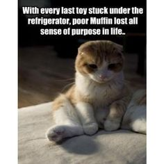 sad cat photo - download this photo for free ❤ liked on Polyvore featuring cat, quotes, backgrounds, sad, text, phrase and saying