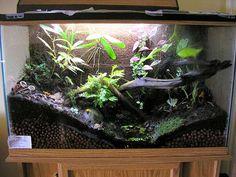 aquarium to terrarium. Fish Tank Terrarium, Gecko Terrarium, Terrarium Reptile, Terrarium Diy, Les Reptiles, Reptiles And Amphibians, Tropical Terrariums, Terraria House Ideas, Frog Tank