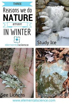 The cooler weather signals the end of many activities, but should nature study be included in that? Here are three reasons why we still do nature study during the winter months.