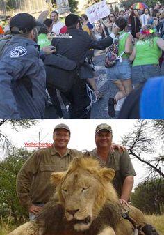 L'indignazione corre sul filo della rete: dal leone al gay pride di Gerusalemme Leone, Gay Pride, Animals, Animales, Animaux, Animal, Animais, Pride