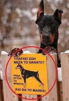 Greek Memes, Funny Greek, Best Funny Pictures, Funny Photos, Cool Pictures, Funny Texts, Funny Jokes, Big Cats Art, Funny Expressions