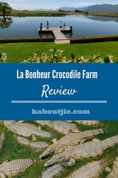 La Bonheur Crocodile Farm Review  My family and I went to La Bonheur Crocodile Farm with a friend and it was an amazing experience for our kids, aside from the crocodiles there was plenty for our kids to do and see. Check out my full La Bonheur Crocodile Farm review for more information.    #labonheurcrocodilefarm #crocodiles #travel #touristattraction #paarl #southafrica South African News, Home Teaching, Lesson Planner, Travel Route, Crocodiles, Family Events, Educational Games, Africa Travel, Beautiful Landscapes