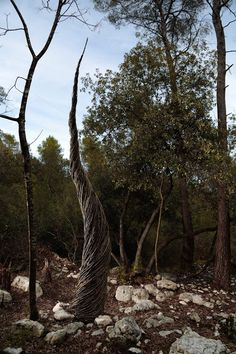 A Year in a French Forest | Spencer Byles