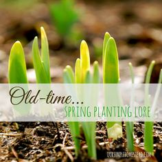 Old-time Planting Lore - I have an old book that I love to look at every winter, and I especially pull it out when I am planning my gardens. My favorite part of the book is reading about old time planting lore. #springplanting #springgardens #gardening