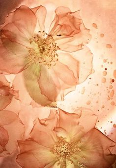 Peach, Petals on water Color Melon, Peach Aesthetic, Shades Of Peach, Peach And Green, Peach Blossoms, Peach Flowers, Just Peachy, Peach Colors, Flower Power