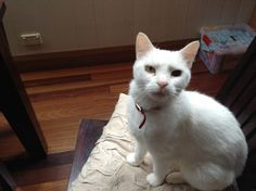 Cats For Adoption - Maggie's Rescue