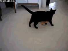 Duckling Follows Cat Around (click for movement)