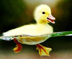 Always behave as a duck: calm and unruffled on the surface but paddling like Hell underneath!