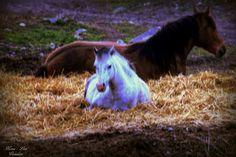 Hester i natten