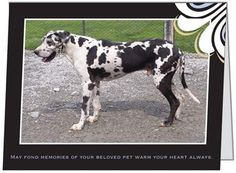 "Purchase ""In Memory"" Cards & support Harlequin Haven Great Dane Rescue. Cards are 5.47x4.21"" folded & come with a white envelope. You can mix & match. Buy them while they last, supplies are limited. Cards are 50 cents each plus shipping & you must buy in increments of 5 (total cards)."