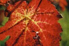 Weinbau Zawodsky Places To Eat, Plant Leaves, Restaurants, Plants, Restaurant, Plant, Food Stations, Planting, Planets