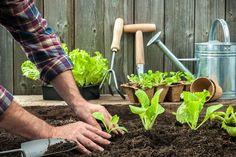 Les légumes à planter en septembre