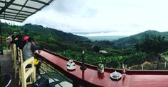#CaféConcorde disfruta de su hermosa vista y una buena taza de Café Concorde, Train, Coffee Cup, Mugs, Sweetie Belle, Strollers