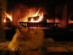 LED Fireplace Cat | Funny Bone Ticklers | Pinterest | Cats, LED ...