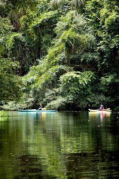kayaking, Rio Morichal Largo, Venezuela
