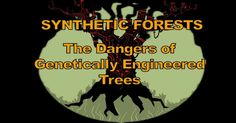 This short, hard-hitting documentary exposes the truth about genetically engineered trees and the devastating impacts they may have on our global ecosystem. http://articles.mercola.com/sites/articles/archive/2016/02/06/genetically-engineered-trees.aspx