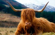 Happy #Coosday! :D (It's the day between Monday & Wednesday) #scotland #madeupday