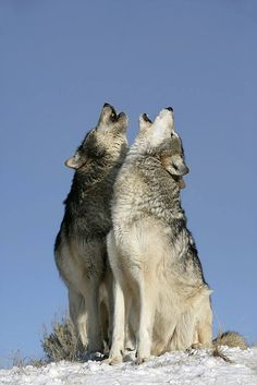 I always want you to howl at the moon with me you and only you my love <3