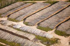 La forêt boréale est  la première victime de la ruée vers l'or noirComparateur Assurance habitationCertains sables bitumineux reposent à seulement quelques mètres sous terre. Des millions de sapins, mélèzes et thuyas sont abattus avant l'arrivée des pelleteuses, qui creuseront de gigantesques carrières pour récupérer les sables gorgés d'hydrocarbures. Les gisements de l'Alberta s'étendent sur 142.000 kilomètres carrés, une surface supérieure à celle de l'Angleterre.>>>Pensez aussi à…