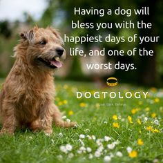 Image result for having a dog will bless you with