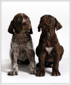 Shorthair pups.: Photo by Photographer Matt Laur - photo.net