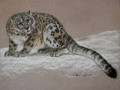 Original Pastel Drawing Full Snow Leopard The Porter Family