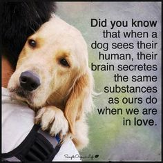 Did you know? #doglove #mansbestfriend
