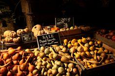 Gourds and Pumpkins @terrain