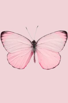 Pink so girly so pretty pink litghts up a dark hart Papillon Butterfly, Papillon Rose, Pink Butterfly, Butterfly Tattoos, Butterfly Wings, Pink Love, Pretty In Pink, Perfect Pink, Pink Pink Pink