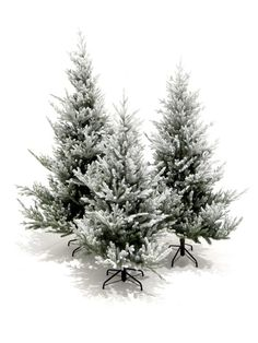 High quality Snowy Tree - Small available to hire. View Snowy Tree - Small details, dimensions and images. Snowy Christmas Tree, Snowy Trees, Ski Rack, Prop Hire, Vintage Ski, 60th Anniversary, Asda, Winter Wonderland, November
