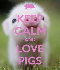 Pigs rock!