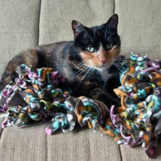 Soothe your furry friend with a pet blanket that's so easy to make, your cat could do it. OK, not really, but this DIY only costs a few dollars to do and needs Dog Crafts, Animal Crafts, Diy Pet Blankets, Animal Projects, Pretty Cats, Diy Stuffed Animals, Pet Beds, Cuddling, Fur Babies
