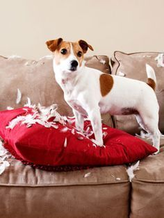 Learn how to handle that moment when your #dog takes the unexpected turn from good to bad. #pets