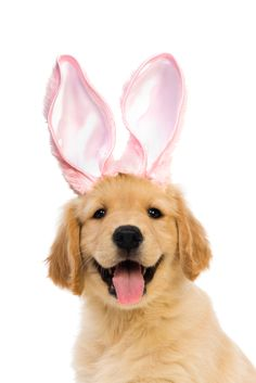 This Is the Happiest Easter Puppy Ever  www.suitupyourdog.de
