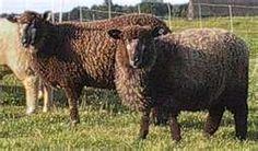 Garden State Sheep Breeders - Sheep & Fiber Festival September 8-9