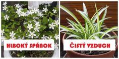 Dnes sa s Vami podelíme o cenné tipy, ktoré Vám pomôžu pri výbere Aloe Vera, Plants, Plant, Planets
