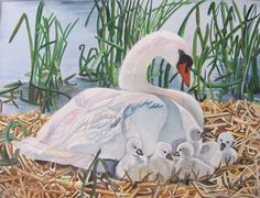 Swans - picture taken @ The Marsh