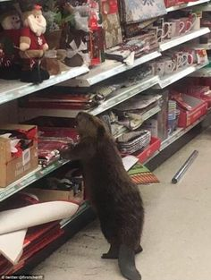 This Beaver Went Christmas Shopping at the 99 Cent Store - Neatorama