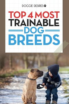 This post explores the top 4 most trainable dog breeds. This includes some awesome dog tips and things related to dog training. #dogtips #dogbreeds #dogtraining