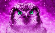 Free Image on Pixabay - Animal, Owl, Nature, Wildlife Pink Animals, Nature Animals, Wildlife Nature, Cool Backgrounds, Character Design References, Cute Images, How Beautiful, Free Pictures, Digital Art