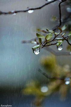 dances in light Beautiful Nature Scenes, Beautiful Nature Wallpaper, Beautiful Gif, Amazing Nature, Rainy Day Photography, Rain Photography, Rainy Wallpaper, Live Wallpaper Iphone, Gif Chuva