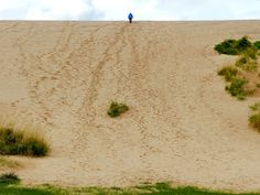 "A friend almost to the top of the Sleeping Bear Dunes ""Dune Climb.""  It's 260' up and if you continue walking, it's about 1.5 miles to Lake Michigan from this dune."