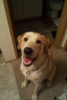 I WOULD KILL SOMEONE FOR SELLING MY DOG WHILE I WAS DEPLOYED!!!! Please post and help find this dog!! | Soldier Returns Home From Afghanistan To Discover His Dog Had Been Sold On Craiglist