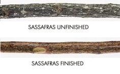 "SASSAFRAS WALKING STICK by Treeline. $12.95. Sassafras makes a light weight, strong walking stick and it is easy to carve or decorate. The wood is a light brown with orange inner bark and dark outer bark. 1"" to 1 1/2"" diameter, 52""-54"" length."