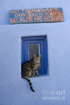 """Young cat sitting on a window ledge in the Cyclades Islands, Greece, under a sign that says """"Why the animals don't go to school, because are no stupid."""""""