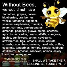 Without Bees we would not have...